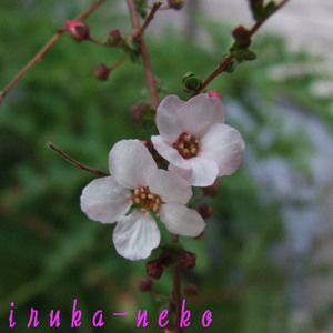 20110311yuki