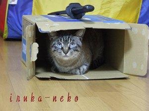 20110319uchi