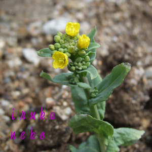 20110322nida