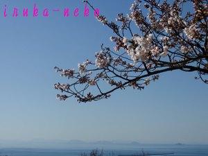 20110404sakura6