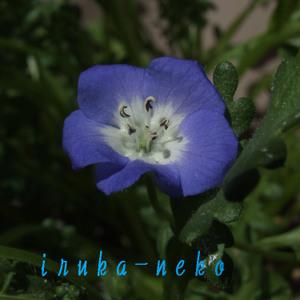 20110404nemo