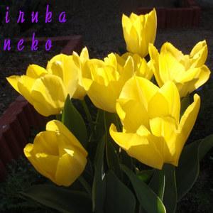 20110404takari