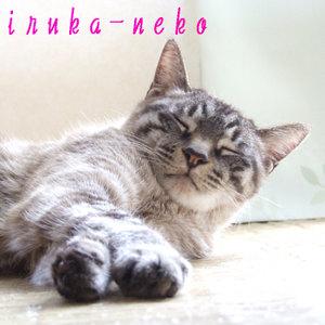 20110403nemu_1