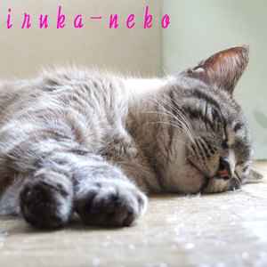 20110403nemu_2