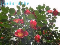20110407urtu