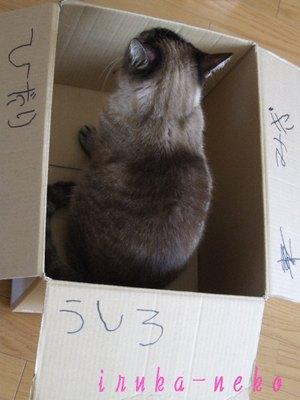 20110410hakou