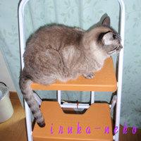 20110414kya_4