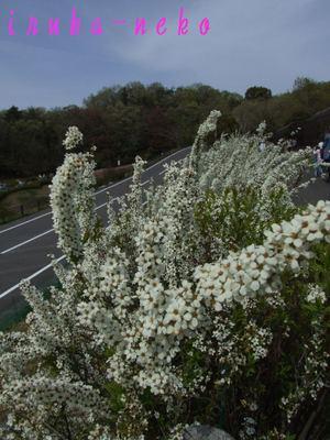20110417yuki