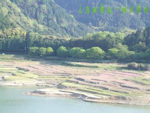 20110429damu