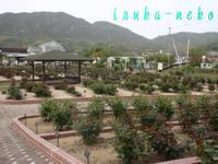 20110504bara1