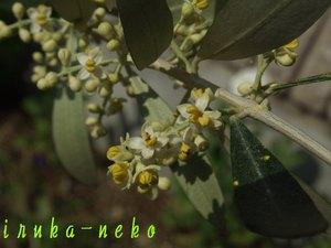 20110525ori
