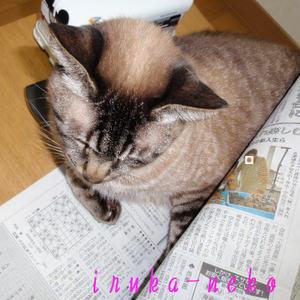 20110529sinbun2