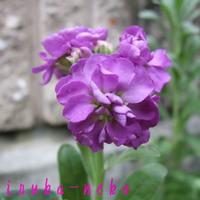 20110531sum