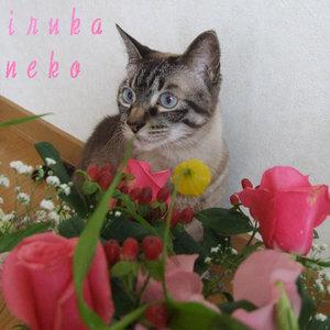 20110615hananeko