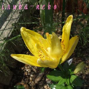 20110623yuri
