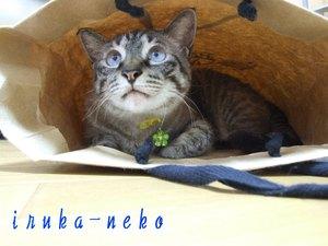 20110621hukuro1