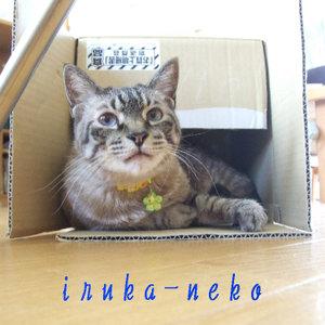 20110623hako