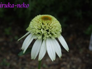 20110707eki