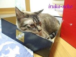 20110712hako