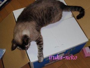20110721hako