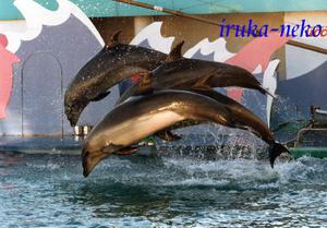 Iruka3