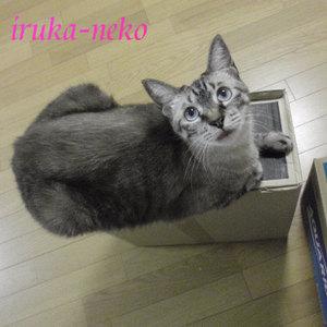 20110901hako