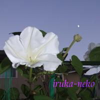 20110906yu