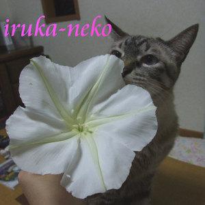 20110907yu2