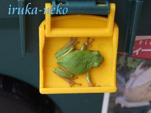 20110921kaeru