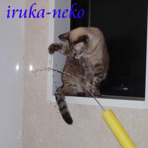 20111001mizu1