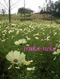 20111010okaki