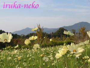 20111010okayama