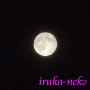 20111011tuki1