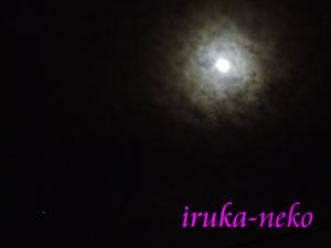 20111011tuki2