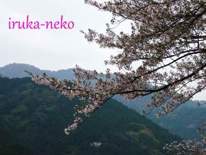 20120413saku5