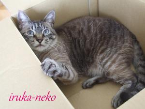 20120531hako3