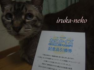 20130829hagaki