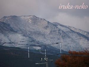20131119yuki