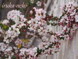 20140307yuki
