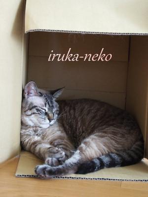 20140730hako1