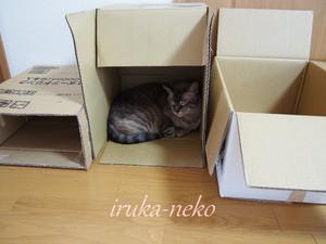 20140816hako