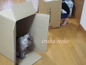 20140914hako2