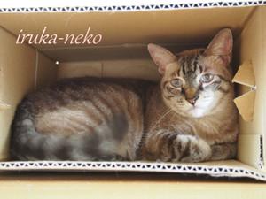 20140915hako1