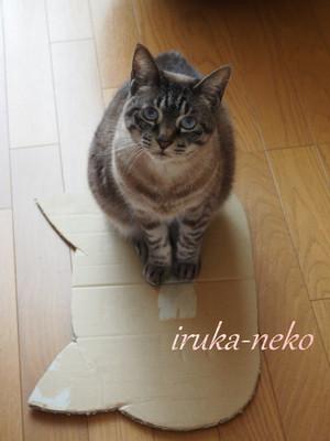 20150408hako