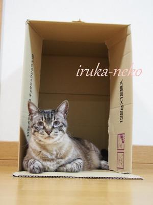 20150502hako