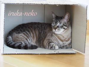 20150510hako