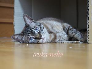 20150531hako