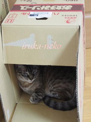 20150608hako1